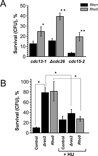 Rho0 transformation and RAS2 deletion improve the survival by increasing the duration of G1-phase.