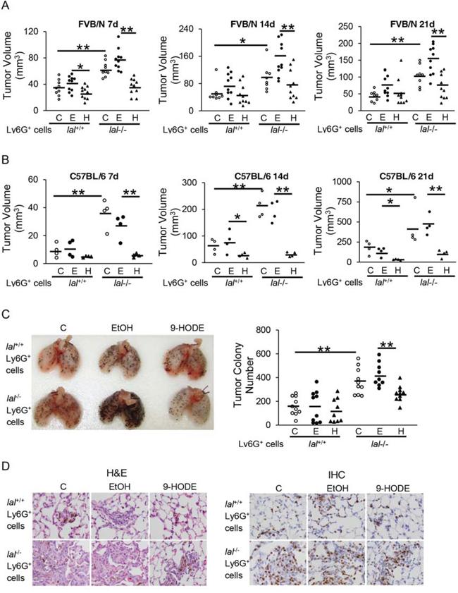 PPARγ ligand reverses lal-/- MDSCs stimulation on tumor growth and metastasis in vivo.