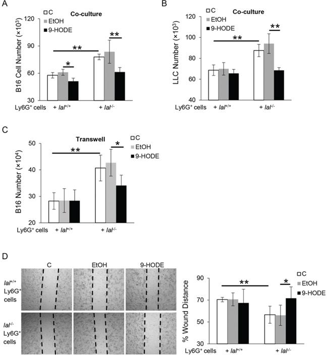 PPARγ ligand inhibits lal−/− MDSCs stimulation on tumor proliferation and migration in vitro.