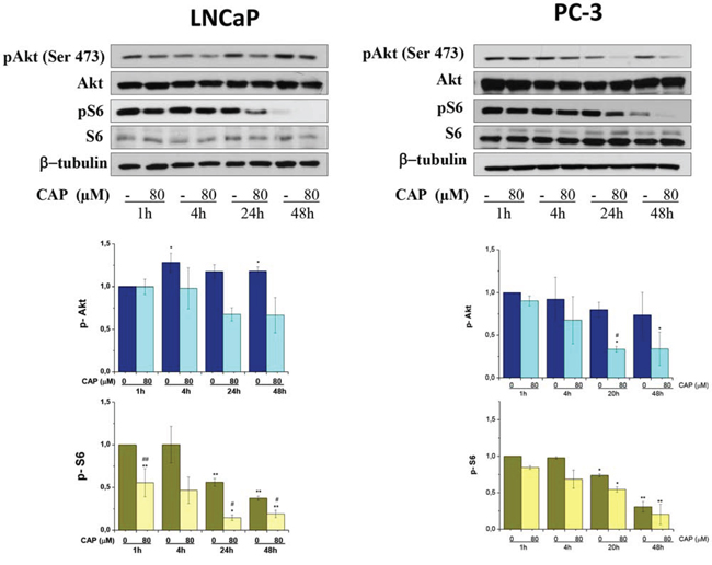 Inhibition of PI3K/Akt/mTOR axe by capsaicin in prostate cancer cells.