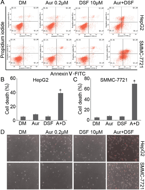 Aur and DSF synergistically induced cancer cell death.