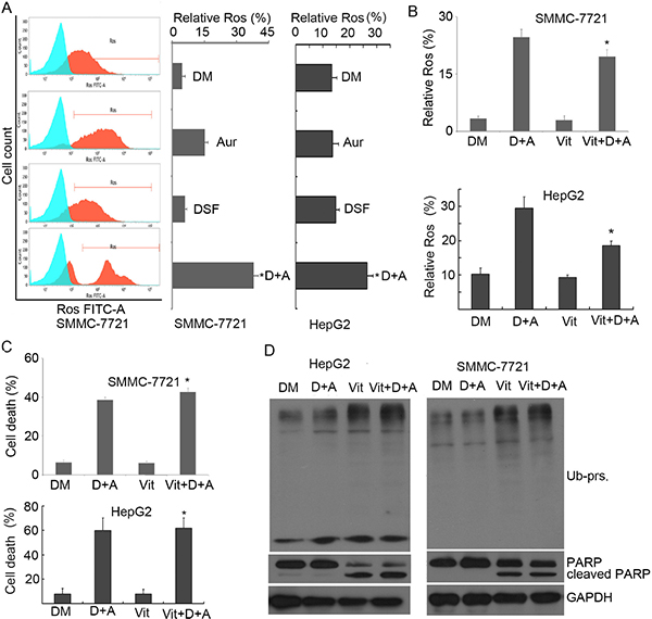 Combination of Aur and DSF resulted in ROS generation but ROS was not responsible for apoptosis.