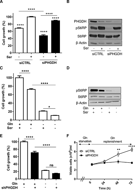 Both exogenous serine and PHGDH expression support leukemia cell growth.