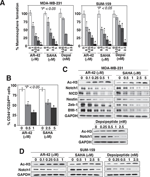 HDAC inhibitors suppress BCSCs, in part, by downregulating Notch1 expression.