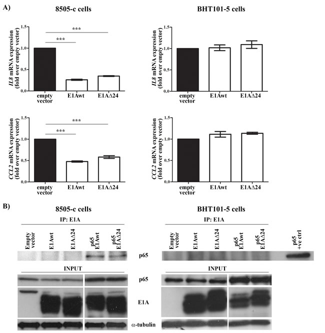 E1A-dependent and -independent modulation of