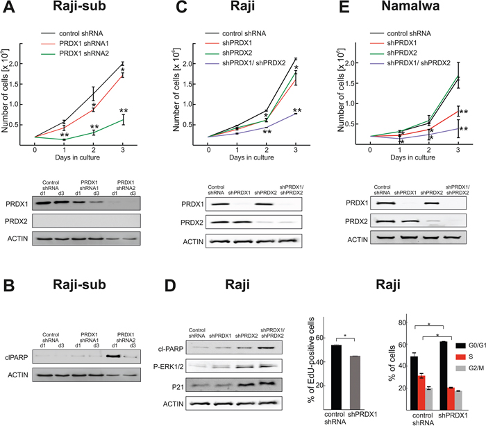 Both PRDX1 and PRDX2 control the proliferation and survival of lymphoma cells.