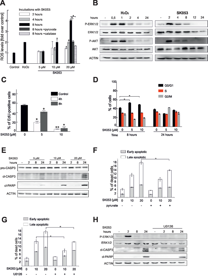 SK053 triggers ROS accumulation, cell cycle arrest and apoptosis.