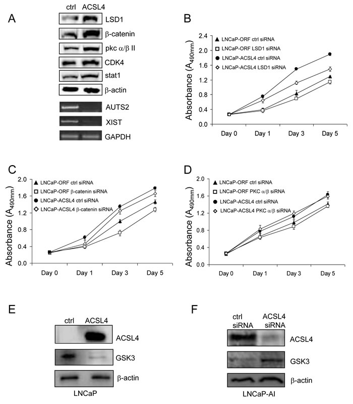 Western blot analysis of selected pathway proteins and their regulation of PCa cell proliferation.