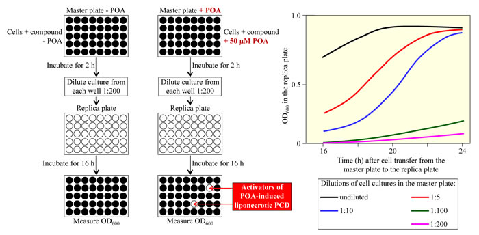 A microplate assay for measuring the viability of yeast cells by monitoring the optical density of a yeast culture at 600 nm (OD