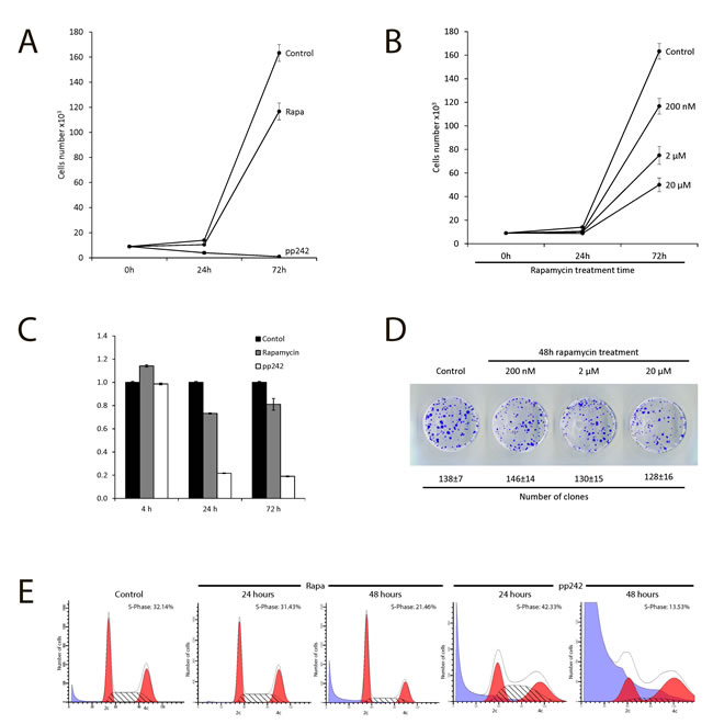 Antiproliferative activity of mTOR inhibitors rapamycin and pp242.