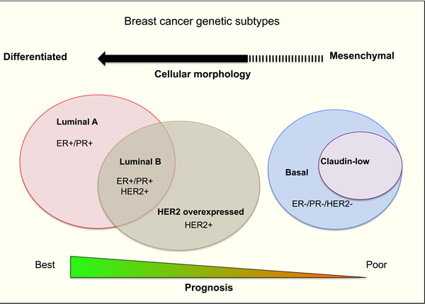 A summary of human breast cancer subtypes