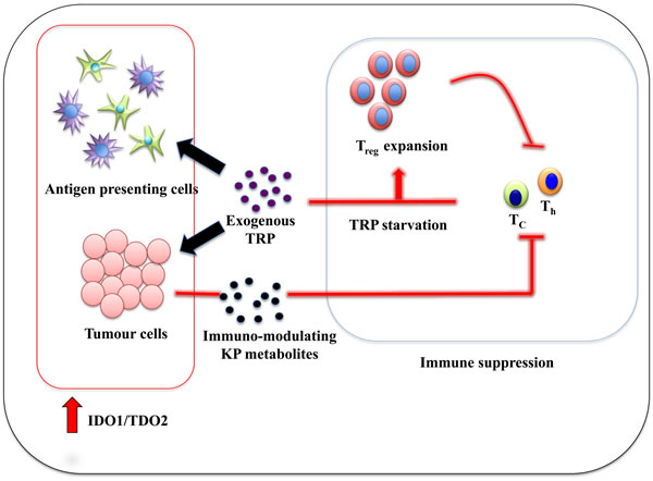 Immune tolerance mechanism by IDO1:TDO2 overexpression in cancer-associated inflammation environment.