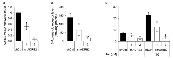 ADRB2 level, receptor binding, and downstream signaling activity in LNCaP shADRB2 cell lines.