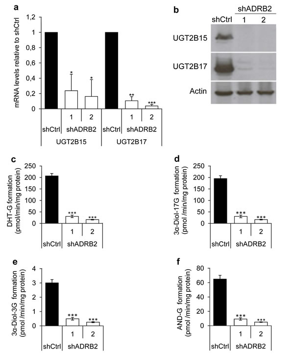 UGT2B15 and UGT2B17 mRNA, protein and effects on androgen glucuronide formation.