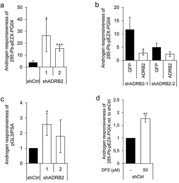 Increased androgen responsiveness in LNCaP shADRB2 cell lines.