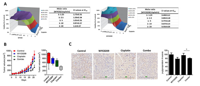 WYC0209 synergized with cisplatin and suppressed p-glycoprotein expression in xenograft animal model.