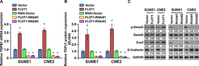 FLOT1 induces an autocrine secretion of TGF-β1 in NPC cells.