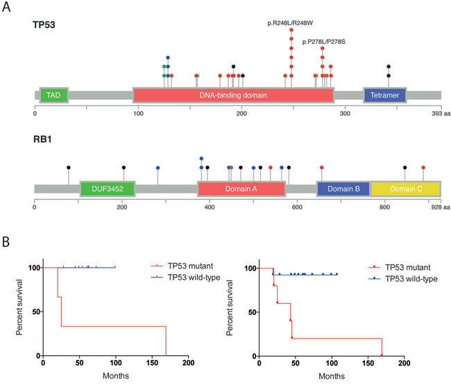 Statistically significant mutations in MCPyV-negative MCC.