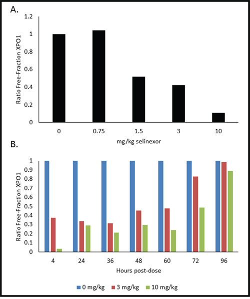 PMBCs from mice dosed with selinexor show dose- and time-dependent responses of XPO1 occupancy.