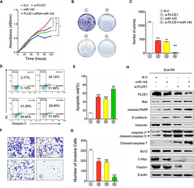 MiR-145 functions as tumor suppressor by inhibiting PLCE1 in ESCC.