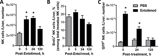 Entolimod-elicited NK cell response in the livers of naïve non-tumor-bearing mice.