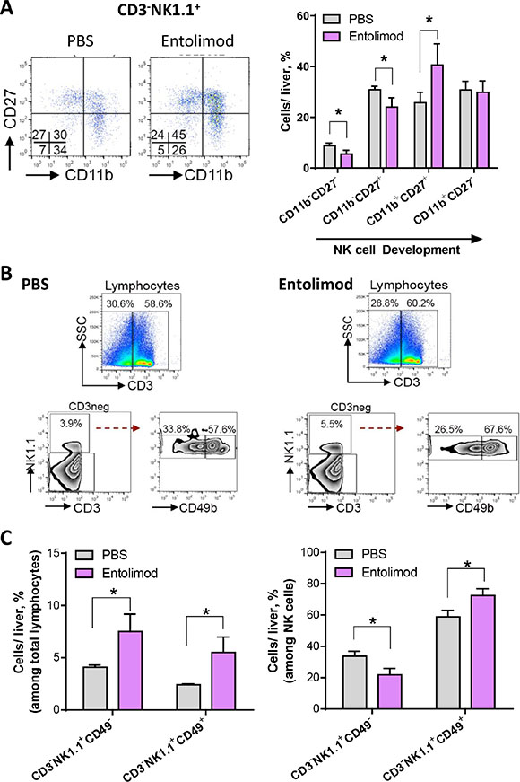 Entolimod induces development and maturation of NK cells in the liver of UM tumor-bearing mice.