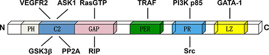 The domain structure of DAB2IP and relative binding proteins.