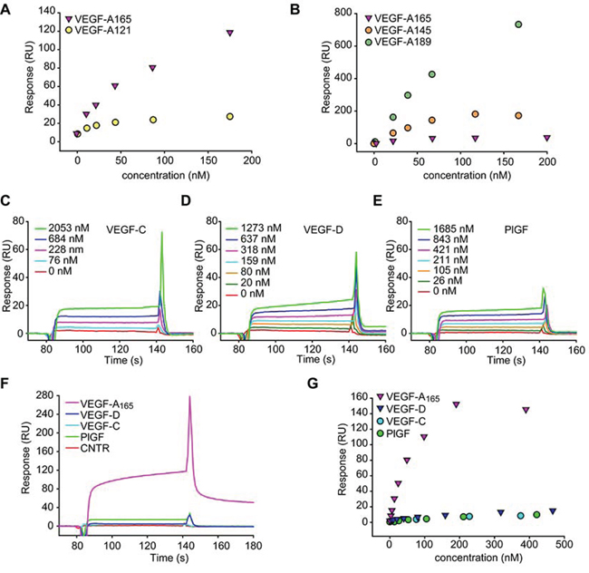 MMRN2 specifically binds to VEGF-A.