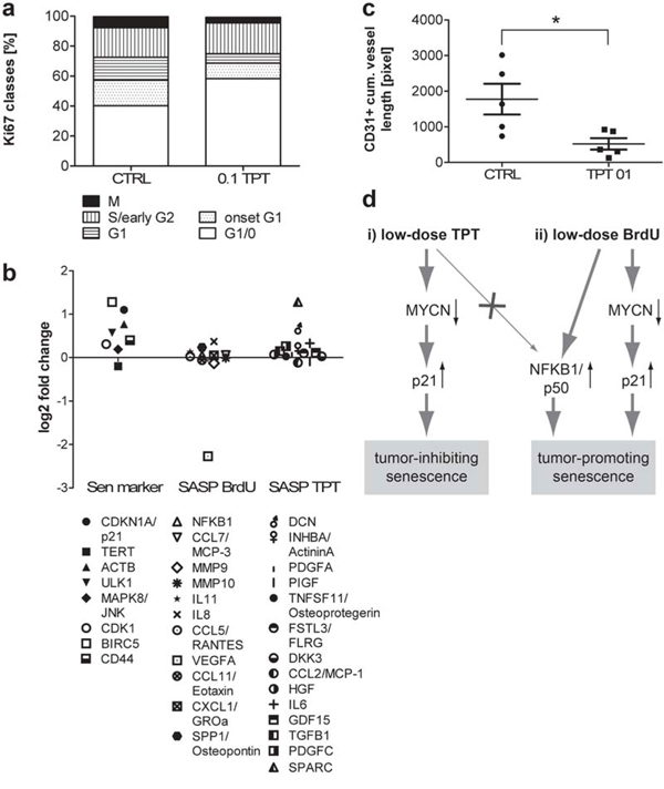 Lack of NFKB1 up-regulation and BrdUsen specific secreted factors in low-dose TPT-exposed tumors in vivo.