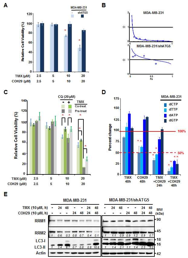 Autophagy is required for the synergistic effect between tamoxifen and COH29.