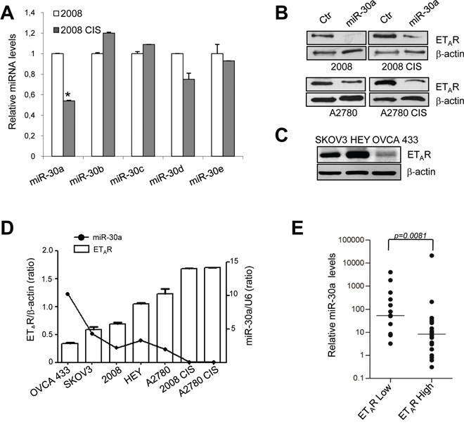 miR-30a is downregulated in chemoresistant EOC cells.