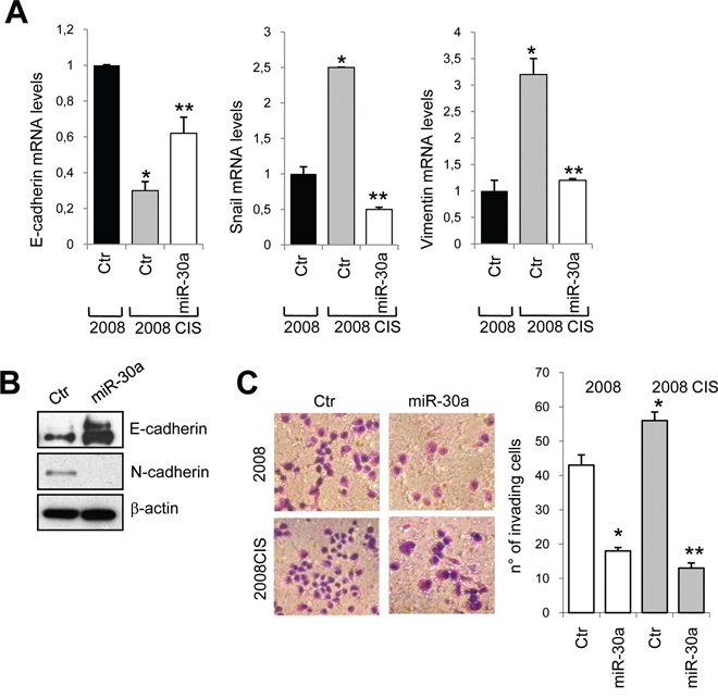 miR-30a inhibits EMT phenotype and cell invasion.