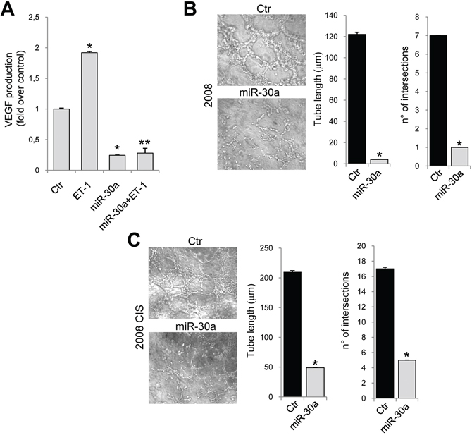 miR-30a inhibits the release of VEGF and vasculogenic-like tubule formation.