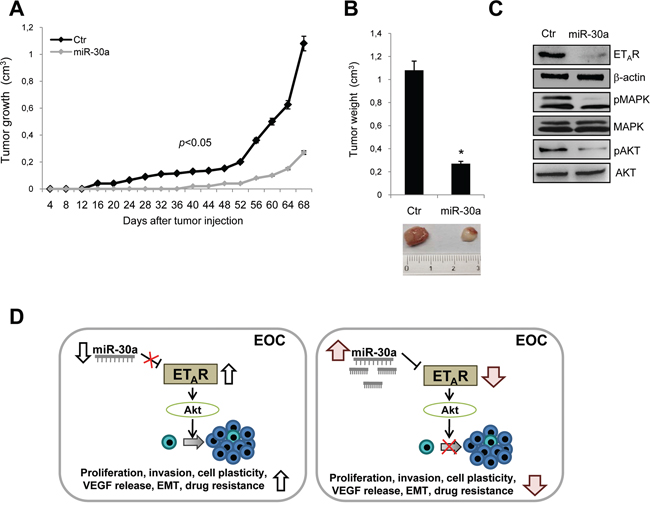 Tumor-inhibitory effects of miR-30a in resistant EOC xenografts.