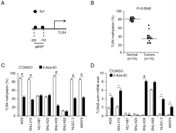 Analysis of relationship between TLR4 expression and promoter methylation in gastric cancer