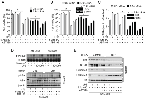 ABT-199 treatment decreased, and combined treatment with LPS and 5-aza-dC restored, TLR4 expression and cell viability