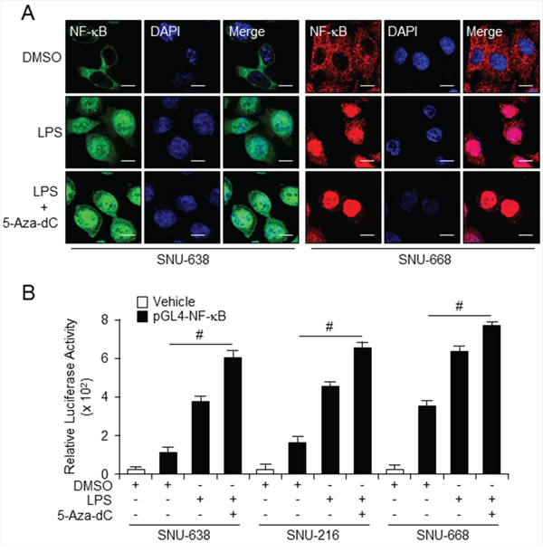 Combined treatment with LPS and 5-aza-dC activates TLR4/NF-κB signaling