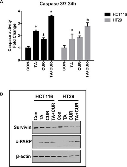 Cur and TA combination induces apoptotic markers.