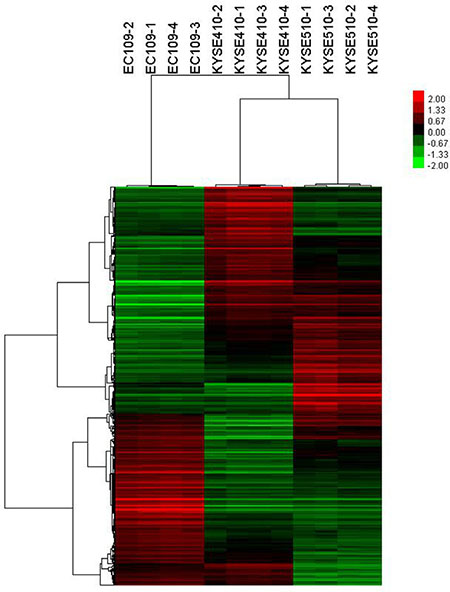 Hierarchical cluster analysis showing differentially expressed genes in cell lines.