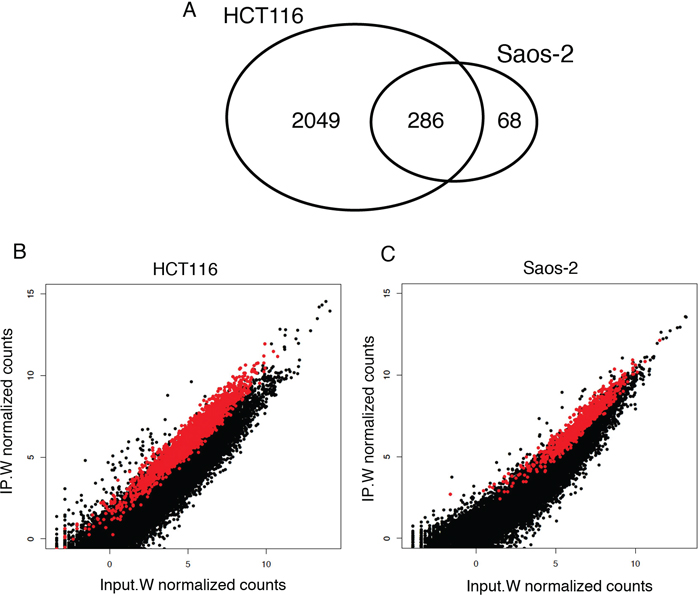 RIP-Seq enrichment analysis identified 286 Wig-1-bound mRNAs common between HCT116 and Saos-2 cells.