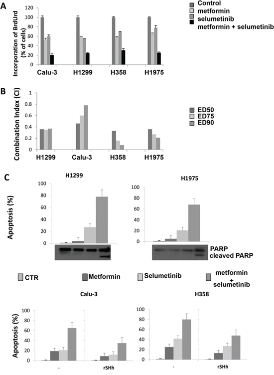 Effect of metformin alone and in combination with selumetinib on cell proliferation, on the induction of apoptosis and activation of GLI1 in CALU-3, H1299, H358 and H1975 cell lines.