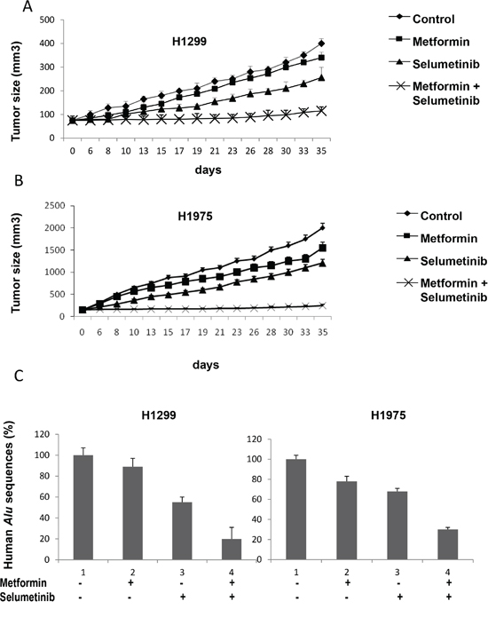 In vivo effects of the combined treatment with metformin and selumetinib.