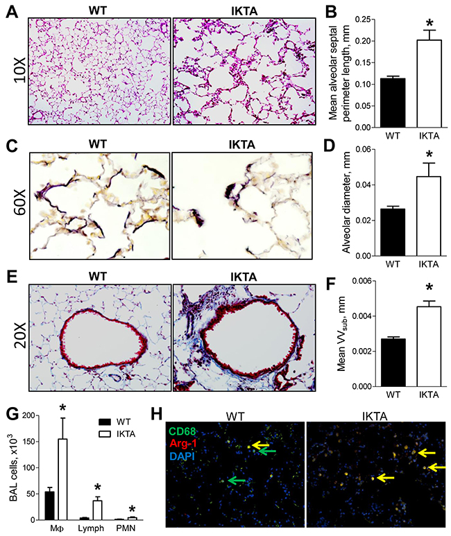Sustained NF-κB activation in airway epithelium results in airway remodeling and emphysema.