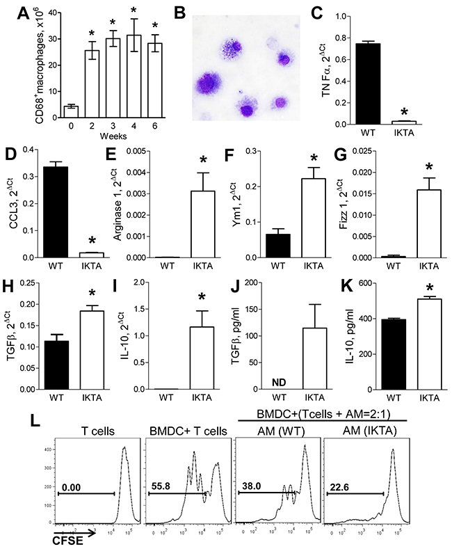 Accumulation of M2-polarized alveolar macrophages during NF-κB-induced chronic airway inflammation generates immunosuppressive microenvironment.