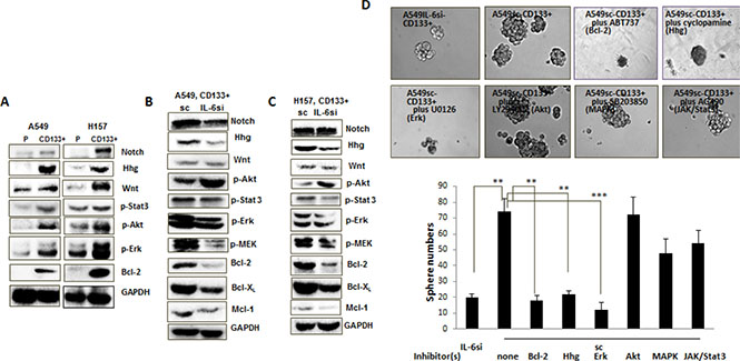 Mechanism dissection studies to reveal signaling pathways responsible for the role of IL-6 in promoting CD133+ cell growth.