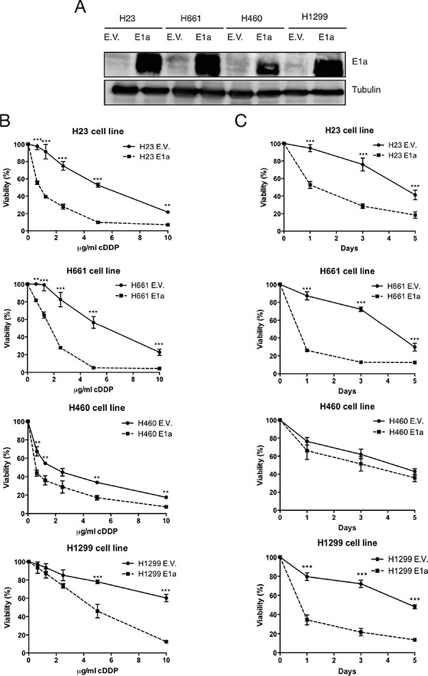 E1a promotes sensitivity to cDDP in NSCLC.