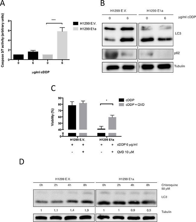 E1a enhances the antitumor effect of cDDP in NSCLC trough promotion of apoptosis.
