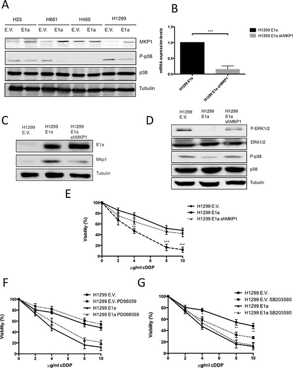 Upregulation of MKP1 mediates E1a associated sensitivity to cDDP in a p38MAPK dependent fashion.