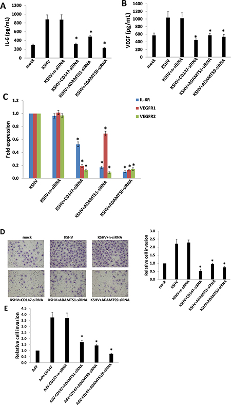 Targeting CD147 and downstream ADAMTSs represses expression of IL-6, VEGF, their respective receptors, and KSHV-infected endothelial cell invasion.