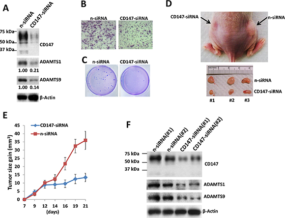 Targeting CD147 significantly suppresses TIVE-LT cell tumorigenesis in vivo.